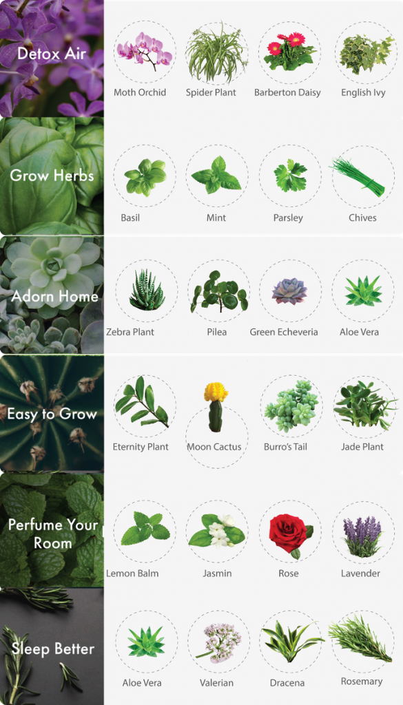 Grow any plant in Pico